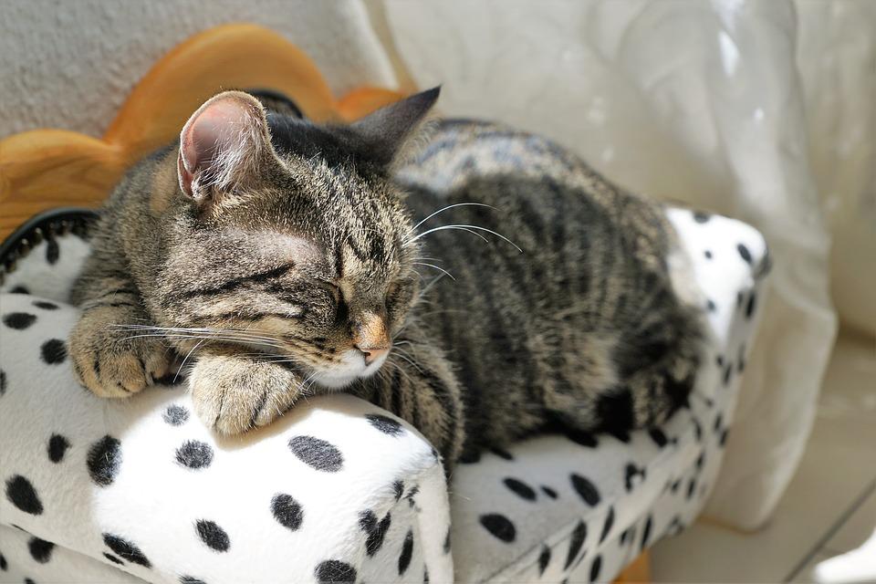 Couch für Katzen