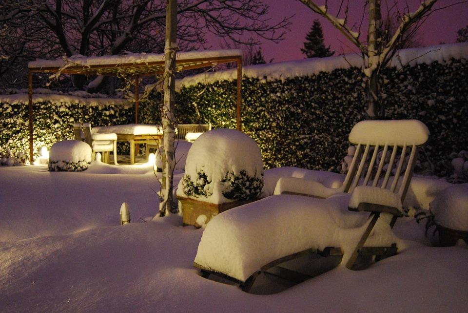 Gartenpflanzen im Schnee